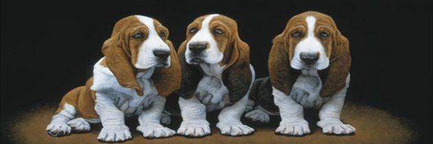 Πέντε βασικοί λόγοι για την υιοθεσία ή όχι του basset hound